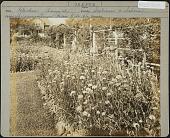 view Unidentified Garden in Shiremanstown, Pennsylvania digital asset: Unidentified Garden in Shiremanstown, Pennsylvania [photoprint]