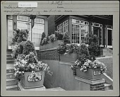 view [Miscellaneous Sites in Harrisburg, Pennsylvania]: Window boxes in front of unidentified beauty parlor on Derry Street. digital asset: [Miscellaneous Sites in Harrisburg, Pennsylvania] [photographic print]: Window boxes in front of unidentified beauty parlor on Derry Street.