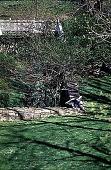 view [Hidden Glen Farms]: detail view of right side of colonial garden (northeast). digital asset: [Hidden Glen Farms]: detail view of right side of colonial garden (northeast).: 1998 Apr.