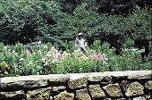 """view [Hidden Glen Farms]: detail of colonial """"Gentleman"""" and colonial """"Shepherd."""" digital asset: [Hidden Glen Farms]: detail of colonial """"Gentleman"""" and colonial """"Shepherd."""": 1998 Jul."""