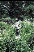 """view [Hidden Glen Farms]: detail of colonial """"Gentleman."""" digital asset: [Hidden Glen Farms]: detail of colonial """"Gentleman."""": 1998 Jul."""