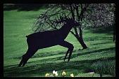 view [Hidden Glen]: closeup of deer folk art ornament. digital asset: [Hidden Glen]: closeup of deer folk art ornament.: 1998.