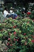 view [Aspen Farms Community Garden]: community gardeners taking a well-earned rest. digital asset: [Aspen Farms Community Garden]: community gardeners taking a well-earned rest.: 1996 Aug.