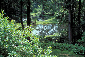 view [Treetops]: pool. digital asset: [Treetops]: pool.: 2001 Jul.