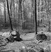 view [Peddler's Village]: walkway at wood's edge. digital asset: [Peddler's Village] [negative]: walkway at wood's edge.