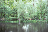 view [Frog Pond]: willow and wooden settee on far side of pond. digital asset: [Frog Pond]: willow and wooden settee on far side of pond.: 2002 Jun.