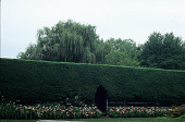 view [Forge Farm]: juniper hedge with tunnel; weeping willow in the background with peonies and daylilies in the foreground. digital asset: [Forge Farm]: juniper hedge with tunnel; weeping willow in the background with peonies and daylilies in the foreground.: 2007 Jun.