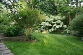 view [Wyndmoor House]: stone retainer wall and walkway with border of trees and flowers. digital asset: [Wyndmoor House]: stone retainer wall and walkway with border of trees and flowers.: 2009.