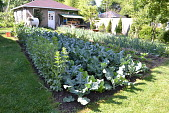 view [Macchione Italian Garden]: one of the vegetable gardens in early summer. digital asset: [Macchione Italian Garden]: one of the vegetable gardens in early summer.: 2012 Jun.