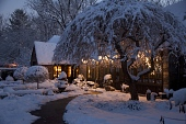 view [Foxlea]: snow on the weeping cherry tree and willow standards on a winter night. digital asset: [Foxlea]: snow on the weeping cherry tree and willow standards on a winter night.: 2014 Jan.