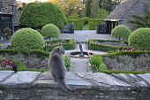 view [Foxlea]: looking over the parterre garden to the courtyard and through the arch of the hornbean hedge. digital asset: [Foxlea]: looking over the parterre garden to the courtyard and through the arch of the hornbean hedge.: 2013 Apr.
