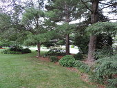 view [MacGregor Gardens]: conifers were planted first on the property for year-round greenery. digital asset: [MacGregor Gardens]: conifers were planted first on the property for year-round greenery.: 2016 Sep.