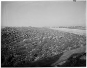 view Miscellaneous Sites in Middletown, Rhode Island: agricultural fields near St. George's School, with school buildings and other structures in the far distance. digital asset: Miscellaneous Sites in Middletown, Rhode Island [glass negative] agricultural fields near St. George's School, with school buildings and other structures in the far distance.