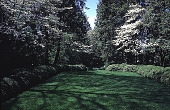 view [Rochambeau House]: the west garden, showing a boxwood-edged lawn and dogwoods. digital asset: [Rochambeau House]: the west garden, showing a boxwood-edged lawn and dogwoods.: 1999 May.