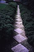 view [Rochambeau House]: a path of marble pavers in gravel between boxwood (Buxus microphylla 'Compacta'). digital asset: [Rochambeau House]: a path of marble pavers in gravel between boxwood (Buxus microphylla 'Compacta').: 2000 May.