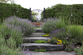 view [The Whim]: the lavender steps from the gated garden to another lawn. digital asset: [The Whim]: the lavender steps from the gated garden to another lawn.: 2009 Jun.