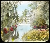 view Magnolia Plantation & Gardens digital asset: Magnolia Plantation & Gardens: [between 1914 and 1949?]