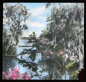 view Magnolia Plantation & Gardens digital asset: Magnolia Plantation & Gardens: [between 1914 and 1949?]