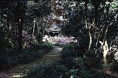 view [Foster/Murray Garden]: the path leading to the butterfly garden. digital asset: [Foster/Murray Garden]: the path leading to the butterfly garden.: 2000 Mar.