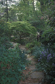 view [Lowrey Garden]: naturalized plantings and stepping stones lead to a Japanese maple. digital asset: [Lowrey Garden]: naturalized plantings and stepping stones lead to a Japanese maple.: 2008 Jun.
