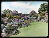 view [Royal Botanic Garden Edinburgh]: a rock garden. digital asset: [Royal Botanic Garden Edinburgh]: a rock garden.: [between 1915 and 1935]