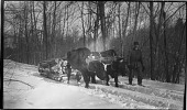 view [Unidentified Sites]: man with oxen pulling a sled in winter. digital asset: [Unidentified Sites] [negative] man with oxen pulling a sled in winter.