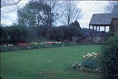 view [Kouns Garden]: looking toward the patio, showing borders of tulips, pansies, candytuft, dutch iris, columbine, and scilla. digital asset: [Kouns Garden]: looking toward the patio, showing borders of tulips, pansies, candytuft, dutch iris, columbine, and scilla.: 1958.