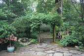 view [Bonny and David Martin Garden]: the bonsai garden is entered through a wisteria-covered arch. digital asset: [Bonny and David Martin Garden]: the bonsai garden is entered through a wisteria-covered arch.: 2009 May.