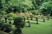 view [Bonny and David Martin Garden]: in the formal bonsai garden the plants are set on cypress and concrete stands. digital asset: [Bonny and David Martin Garden]: in the formal bonsai garden the plants are set on cypress and concrete stands.: 2009 May.
