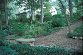 view [Lothrop Garden]: woodland plantings with bench looking up to house on hill. digital asset: [Lothrop Garden]: woodland plantings with bench looking up to house on hill.: 2002 Aug.