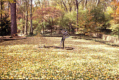 view [GATOP]: old lawn tennis court site covered with fall leaves; figured bronze sculpture on reflecting pool. digital asset: [GATOP]: old lawn tennis court site covered with fall leaves; figured bronze sculpture on reflecting pool.: 2006.