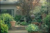 view [Graham Garden]: walkway leading to rear garden, showing 'Sarah's Favorite' crape myrtle, a river birch (Betula nigra), and an Australian Sword Fern (Nephrolepis obliterata) 'Kimberly Queen' in a large antique English pot. digital asset: [Graham Garden]: walkway leading to rear garden, showing 'Sarah's Favorite' crape myrtle, a river birch (Betula nigra), and an Australian Sword Fern (Nephrolepis obliterata) 'Kimberly Queen' in a large antique English pot.: 2007 Apr.