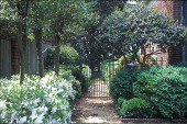 view [Bowlin Price Lewis Garden]: path bordered by boxwood, 'Mrs. G. G. Gerbing' azaleas, cleyera, hollies, and magnolia trees. digital asset: [Bowlin Price Lewis Garden]: path bordered by boxwood, 'Mrs. G. G. Gerbing' azaleas, cleyera, hollies, and magnolia trees.: 2008 Apr.