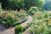 view [Hays Gardens]: the rose garden includes both circular and straight lines to create interest. digital asset: [Hays Gardens]: the rose garden includes both circular and straight lines to create interest.: 2011 Jul.