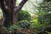 view [The Craighead House and Garden]: the hackberry tree won a big old tree contest. digital asset: [The Craighead House and Garden]: the hackberry tree won a big old tree contest.: 2013 Aug.