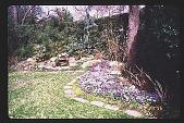 view [Coke Garden]: rock garden. digital asset: [Coke Garden]: rock garden.: 1996 Feb. 24.