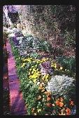 view [Coke Garden]: cutting garden. digital asset: [Coke Garden]: cutting garden.: 1996 Feb. 24.