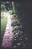 view [Coke Garden]: wall garden. digital asset: [Coke Garden]: wall garden.: 1996 Jul. 15.