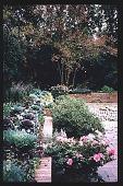 view [Coke Garden]: winter. digital asset: [Coke Garden]: winter.: 1996 Nov. 29.