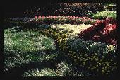 view [Dallas Arboretum and Botanical Garden]: flower beds. digital asset: [Dallas Arboretum and Botanical Garden]: flower beds.: 1996 Oct. 1.