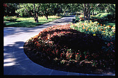 view [Dallas Arboretum and Botanical Garden]: summer garden border. digital asset: [Dallas Arboretum and Botanical Garden]: summer garden border.: 1996 Jul.
