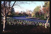 view [Dallas Arboretum and Botanical Garden]: trees in winter. digital asset: [Dallas Arboretum and Botanical Garden]: trees in winter.: 1996 Jan.