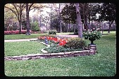 view [Dogwoods]: facing east, looking from the lawn to a low rock retaining wall, shaped bulb bed, and jardinieres planted with geraniums. digital asset: [Dogwoods]: facing east, looking from the lawn to a low rock retaining wall, shaped bulb bed, and jardinieres planted with geraniums.: 1985.