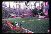 view [Dogwoods]: facing north, looking from the bulb bed to the west lawn area and woods. digital asset: [Dogwoods]: facing north, looking from the bulb bed to the west lawn area and woods.: 1985.
