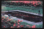 view [Dogwoods]: a close-up of the ornamental pool in the clock garden, showing azalea parterres. digital asset: [Dogwoods]: a close-up of the ornamental pool in the clock garden, showing azalea parterres.: 1986.
