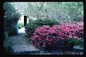 view [John Sweeney Mellinger Garden]: the brick paved walkway leading to the tool house in the rear garden. digital asset: [John Sweeney Mellinger Garden]: the brick paved walkway leading to the tool house in the rear garden.: 1985.