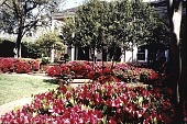 view [Ravenwood]: in front of the main entrance to the house in spring, showing azaleas. digital asset: [Ravenwood]: in front of the main entrance to the house in spring, showing azaleas.: 1999.