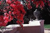 view [Rienzi]: detail of decorative urn and wall, with 'Judge Solomon' azaleas. digital asset: [Rienzi]: detail of decorative urn and wall, with 'Judge Solomon' azaleas.: 1985.