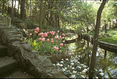 view [Sewell Garden]: stone steps and west view of creek. digital asset: [Sewell Garden]: stone steps and west view of creek.: 2003 Apr.