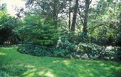 view [Shutt Garden]: stone sculpture in a bed of ferns and hydrangeas. digital asset: [Shutt Garden]: stone sculpture in a bed of ferns and hydrangeas.: 2007 Jun.